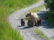 endlich Bären