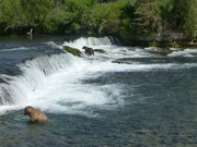 am Wasserfall