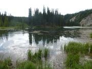 am Horseshoe Lake
