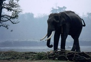 Chitwan-Nationalpark
