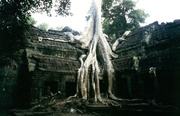 Ta Prohm Tempel bei Angkor