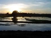 Sonnenuntergang im Reisfeld
