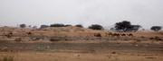 Kamele und Sand