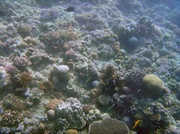 Schnorcheln vor Balicasag