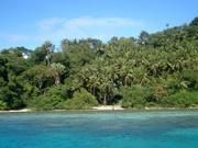 Korallenriff bei Puerto Galera