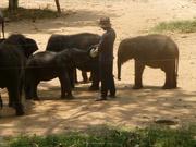 im Elefanten-Waisenhaus
