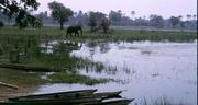 Im Okavango Delta: