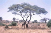 Tarangire-Nationalpark