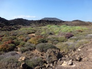 auf Isla de Lobos