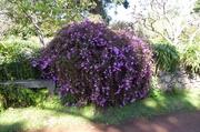 in den Palheiro-Gärten