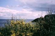 Kap Corse