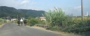 auf einer Hauptstraße in Albanien
