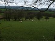 mitten in Wales