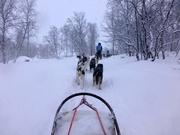 Schlittenfahrt mit Huskys