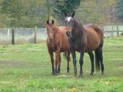 Pferde bei Burgdorf