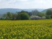 blühende Landschaft