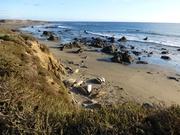 See-Elefanten an traumhafter Küste