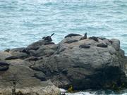 unterwegs einige Seehunde