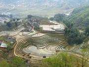 hier wächst der Reis